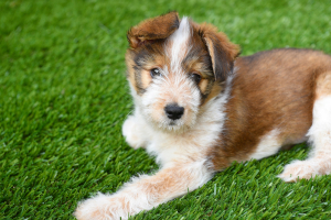 Artificial grass cleaner for dogs