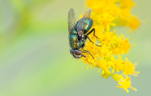 fly sitting on a flower