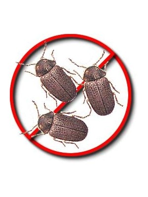 Book Lice Killer | Pest Control