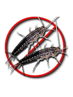 Silverfish Killer | Pest Control