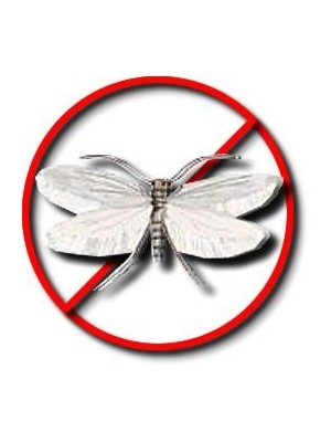 Moth Killer | Clothes Moth Killer | Pest Control